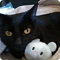 Adopt A Pet :: Kaiser - Yorba Linda, CA
