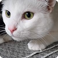 Adopt A Pet :: Hank - Jackson, MO