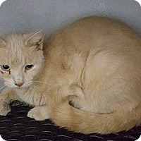 Adopt A Pet :: Buttercup - Mount Sterling, KY