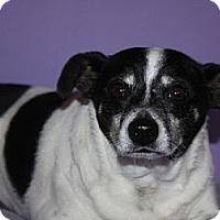 Adopt A Pet :: Rizzo - Phelan, CA