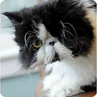 Adopt A Pet :: Casey - Columbus, OH