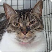 Adopt A Pet :: Inara - Winter Haven, FL