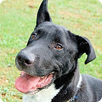 Adopt A Pet :: Derek - White Plains, NY