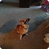 Adopt A Pet :: Logger - Puyallup, WA