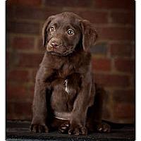 Adopt A Pet :: Thelma - Owensboro, KY