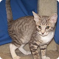 Adopt A Pet :: K-Gail4-Grigori - Colorado Springs, CO