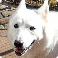 Adopt A Pet :: Henrietta - Oakley, CA