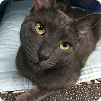 Adopt A Pet :: Casper - New York, NY