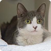 Adopt A Pet :: Exodus - Merrifield, VA