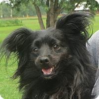 Adopt A Pet :: Max - Salem, NH