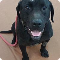 Adopt A Pet :: Bosco - Oberlin, OH