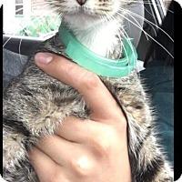 Adopt A Pet :: Moriah - Horsham, PA