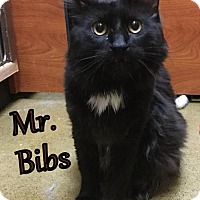 Adopt A Pet :: Mr. Bibbs - Hamilton, ON