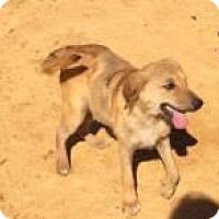 Adopt A Pet :: Petunia - Rexford, NY