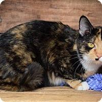 Adopt A Pet :: Sissy - Germantown, MD