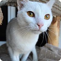 Adopt A Pet :: Meryl - Michigan City, IN