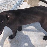 Adopt A Pet :: Baxter - Groton, MA