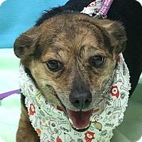 Adopt A Pet :: Gary - Evansville, IN