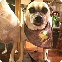 Adopt A Pet :: Stimpy - Anaheim, CA
