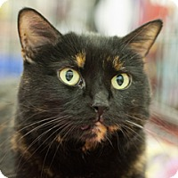 Adopt A Pet :: Black Jackie - Great Falls, MT