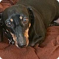 Adopt A Pet :: Winnie - Jacobus, PA