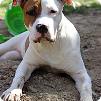 Adopt A Pet :: Sasha - Waldorf, MD