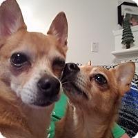 Adopt A Pet :: Taco and Bell - Richmond, VA