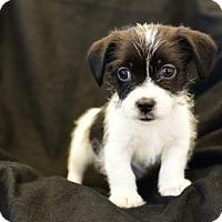 Adopt A Pet :: TAKO - Marina Del Ray, CA