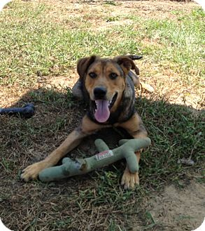 Shepherd (Unknown Type) Mix Dog for adoption in Meridian, Mississippi - Frannie