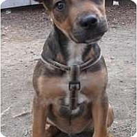 Adopt A Pet :: Benny - New York, NY