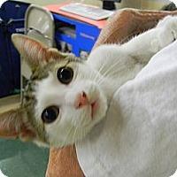 Adopt A Pet :: Franky - Naples, FL