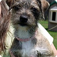 Adopt A Pet :: Whitney - Baton Rouge, LA