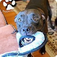 Adopt A Pet :: Neon (Courtesy Listing) - La Habra, CA