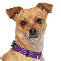 Adopt A Pet :: Mabel - Burbank, CA