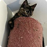 Adopt A Pet :: Tess - Florence, KY