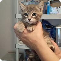 Adopt A Pet :: Buford - Lawrenceville, GA