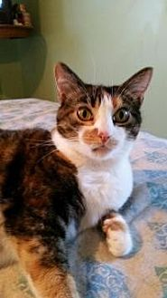 Calico Cat for adoption in Lexington, Kentucky - Baby