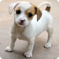 Adopt A Pet :: Baby Saltaire - Oakley, CA