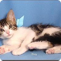 Adopt A Pet :: Troy - Kerrville, TX