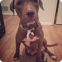 Adopt A Pet :: Bubbles (FORT COLLINS) - Fort Collins, CO