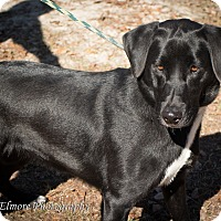 Adopt A Pet :: Lilly - Daleville, AL