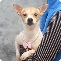 Adopt A Pet :: Sandy - Garfield Heights, OH