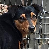 Adopt A Pet :: Louise - Big Canoe, GA