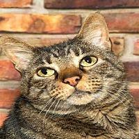 Adopt A Pet :: ELVIS - Alameda, CA