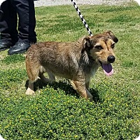 Adopt A Pet :: Sonny - Newcastle, OK