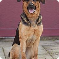 German Shepherd Dog/Rottweiler Mix Dog for adoption in Cambridge, Ontario - Flame