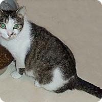 Adopt A Pet :: Brenda - Catasauqua, PA