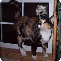 Adopt A Pet :: Jaime - Summerville, SC