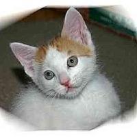 Adopt A Pet :: Tucker - Montgomery, IL