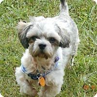 Adopt A Pet :: Chai - Wellington, OH